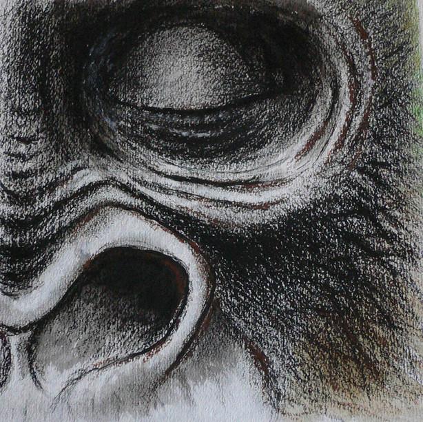 •  Scimmie Antropomorfe