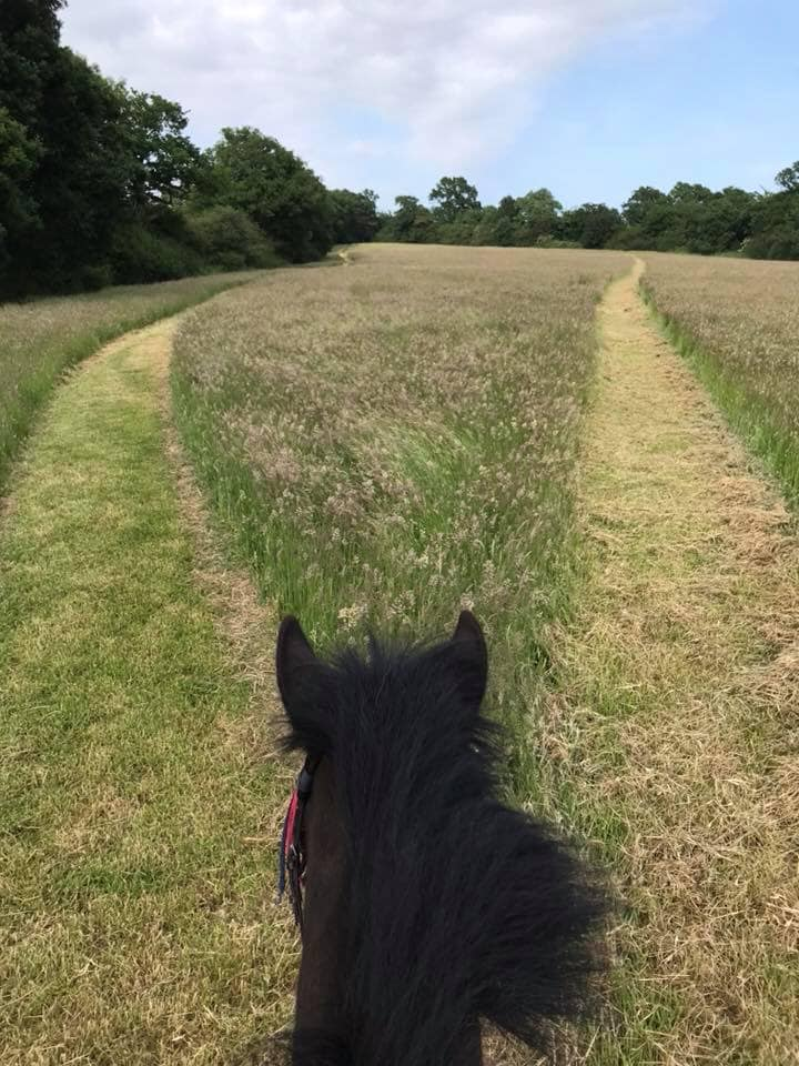 Track round the hay field