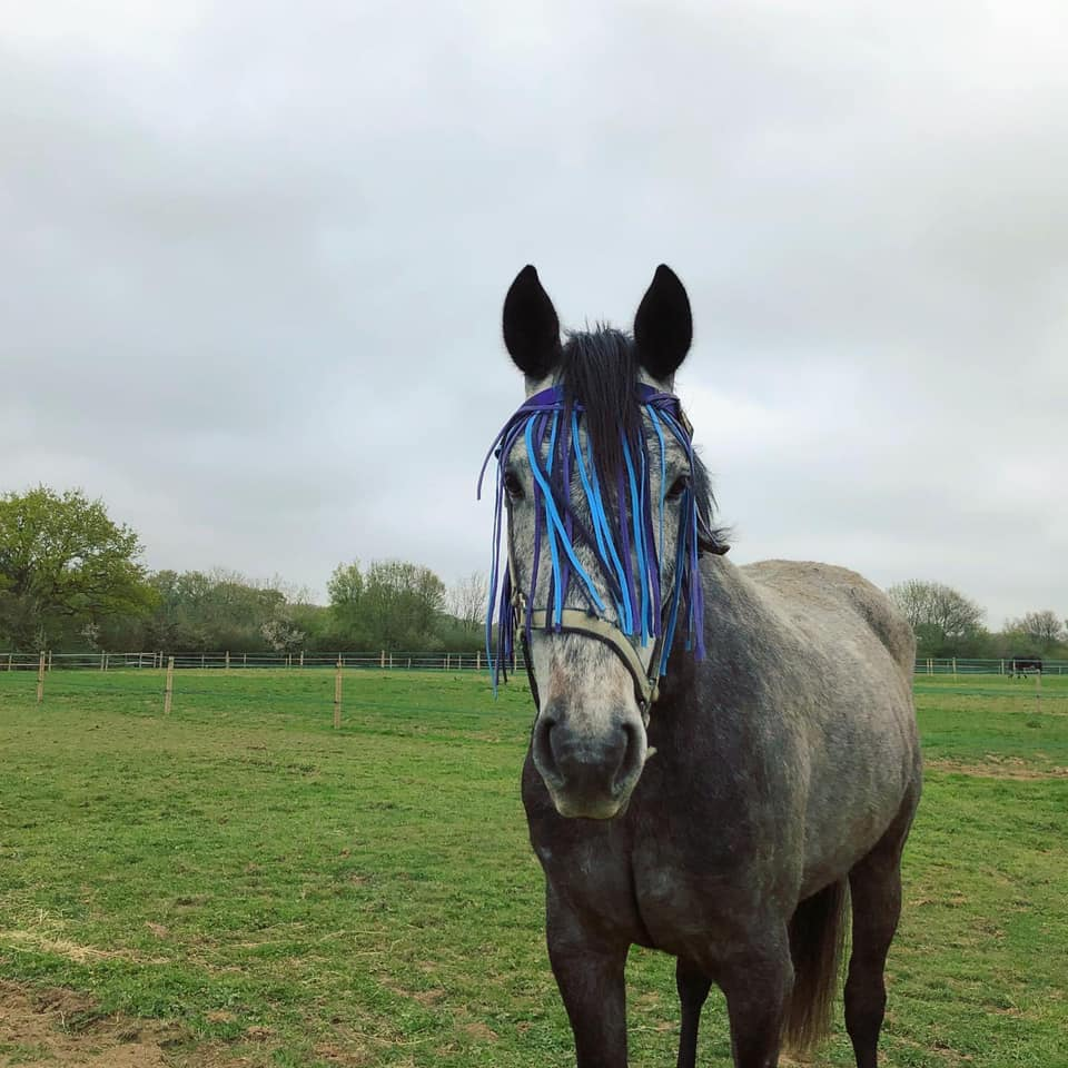 Rotational grazing to suit the individual horses needs