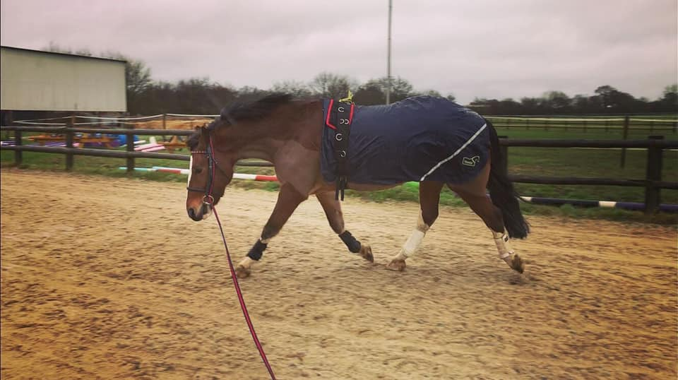 Lunging available