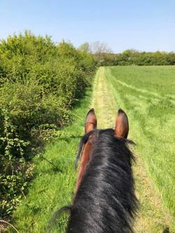 Track round the fields