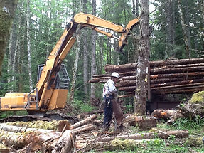 Dozer Deck Timber Sale 003_edited.jpg