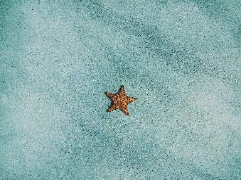 star.jpg