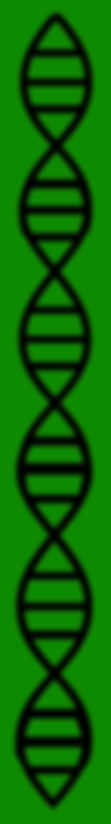 DNA green 8.png