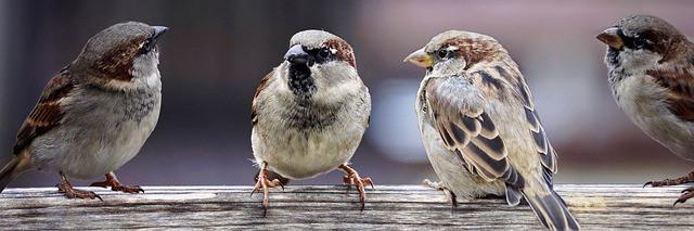vrabec-simbolika-pomen-videnja-živali-vibracijeduse.si