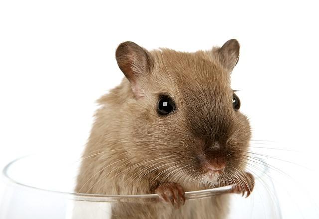 pomen-videnja-živali-miši-vibracijeduse.si
