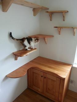 posebna-macja-soba