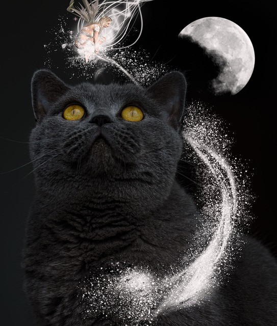 simbolika-duhovni-pomen-videnja-mačke