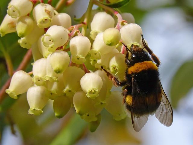 pomen-videnja-živali-čmrlj-čebela-vibracijeduse.si