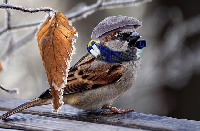vrabec-simbolika-duhovni-pomen-videnja-vibracijeduse.si