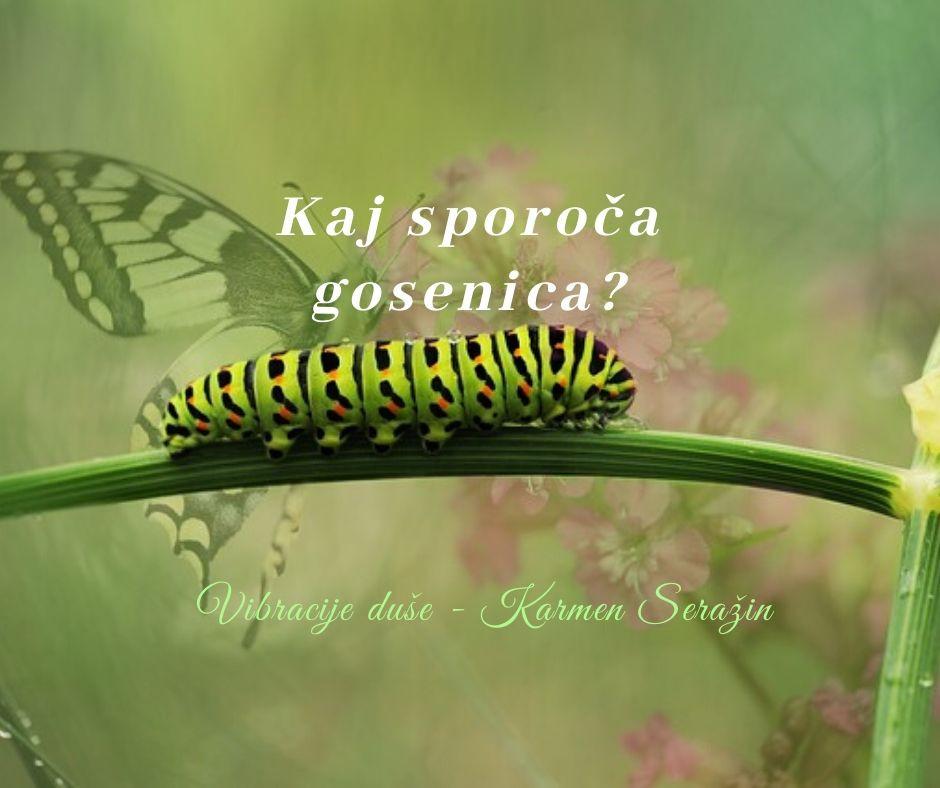 simbolika-duhovni-pomen-videnja-gosenice