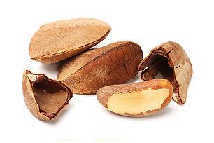 Brazil Nut.jpg