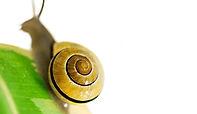 Snail Secretion.jpg
