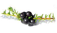 Black Crowberry.jpg