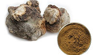 Fommes Officinalis Mushroom.jpg