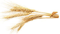 Wheat Proteins.jpg