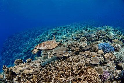 Coral reef in Kerams islands