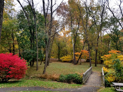 The Grove in Fall