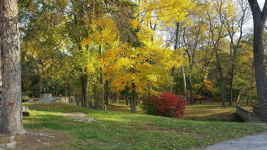 The Grove in Fall 2