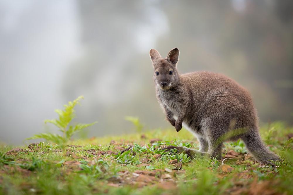 Resort photography Tasmania wildlife