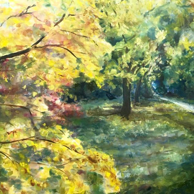 Winkworth Arboretum autumn colour