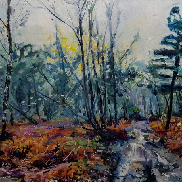 path through woods,