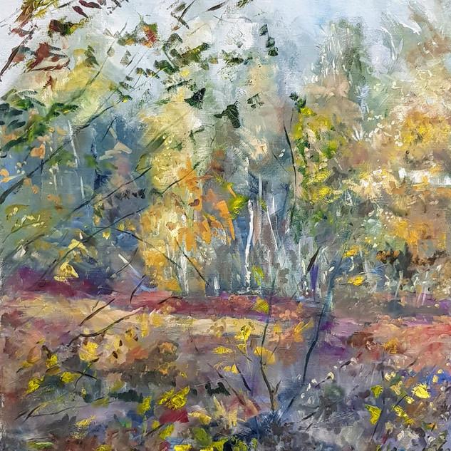 autumn colours,