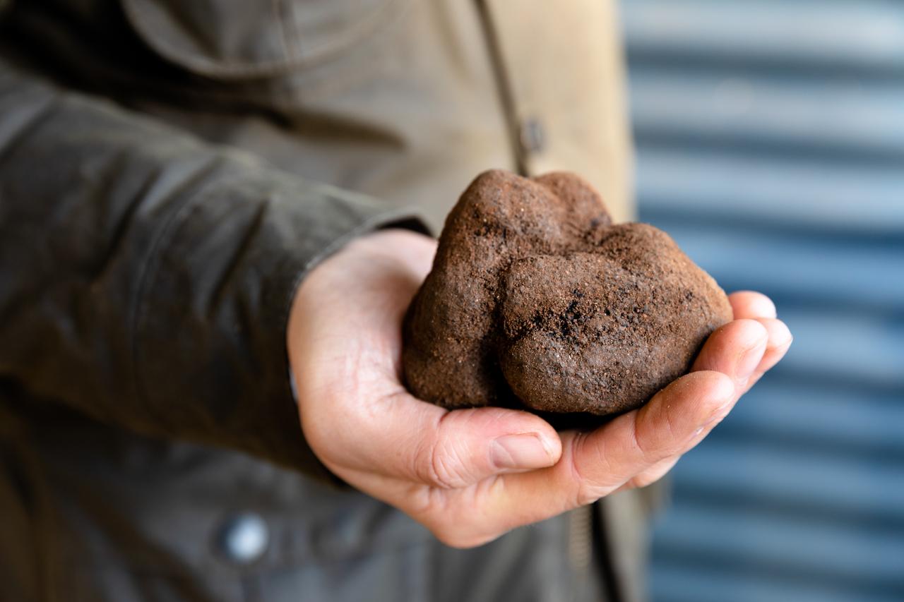 Australian Truffle Traders, Manjimup Truffle, Australian Truffle, Tuber Melanosporum