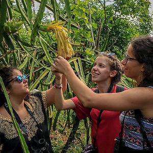 mujeres con planta en yaax tekit yucatán