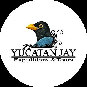 Logo_YucatanJays.png