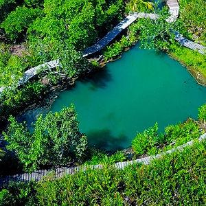 cenote y selva verde en punta nichilí yucatán