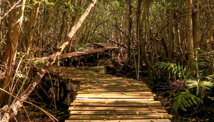 CarruselYuc_PuntaNichil_Yucatan_05.jpg