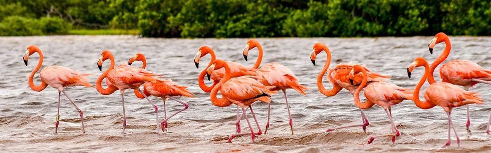 Main_RiverFlamencos_Yucatan.jpg