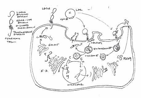 juup sketch (2).jpg