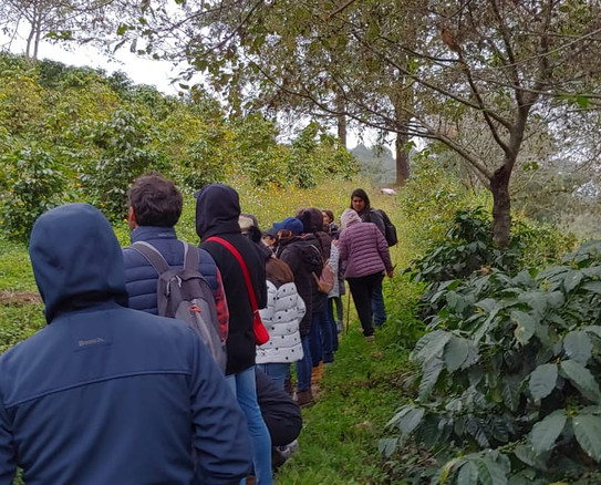 Ruta del café, coffee route, specialty coffee, coffee tasting, glamping, nature, eco-friendly, sustainable tourism, México & Puebla
