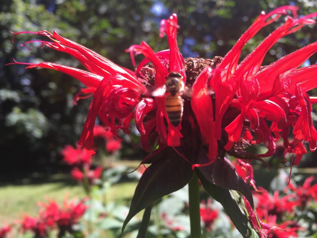 beeonflower.jpeg