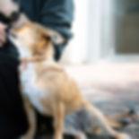 犬カッパータグ.jpg