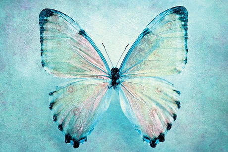 %27Blue+Butterfly%27+Painting+Print+on+C