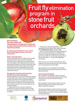 QFly Stone Fruit Fact Sheet.jpg