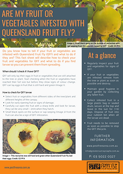 Infested Fruit Fact sheet FINAL.png