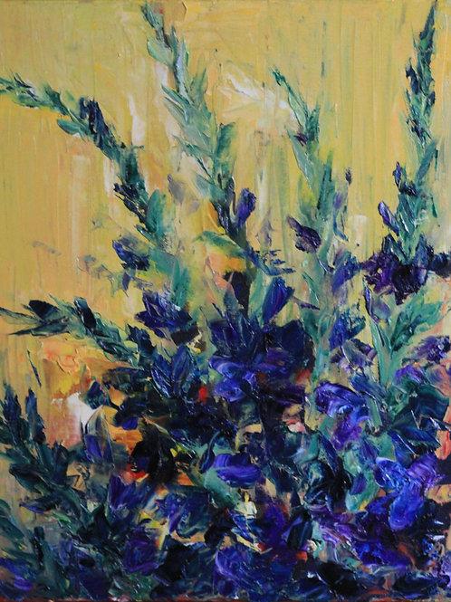 Violet Gladiolus