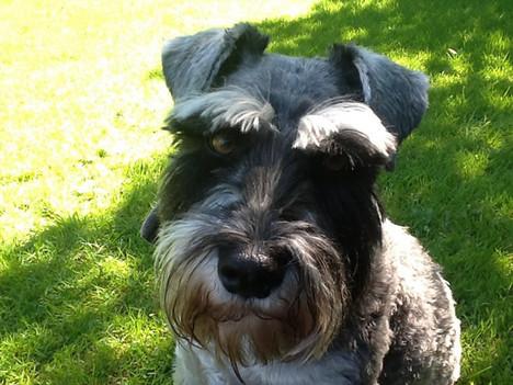 luxury dog friendly cottages Quantock Hills