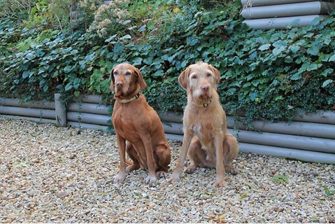 Quantock-cottages-luxury-cottages-dog-fr