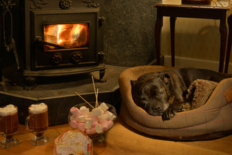 luxury coastal cottages dog friendly