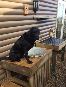 luxury dog friendly cottages somerset
