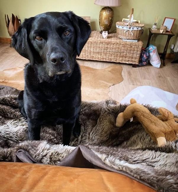 Quantock-luxury dog friendly cottages Quantock Hills