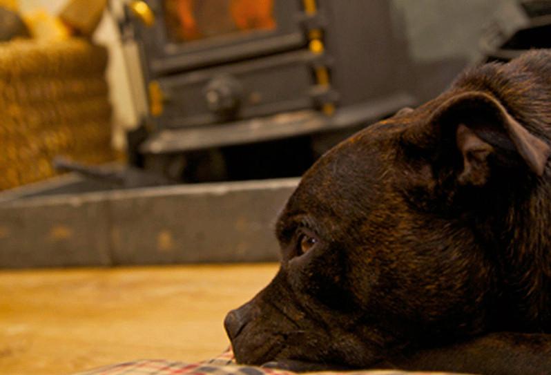 hot-tub-luxury-dog-friendly-cottage-quan