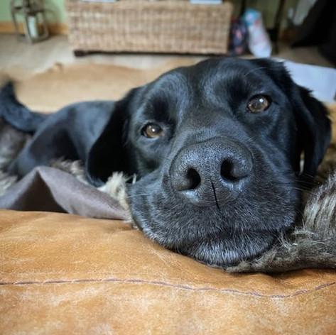 Quantock-cottages-luxury-cottages-dog-frrural country cottages dog friendly
