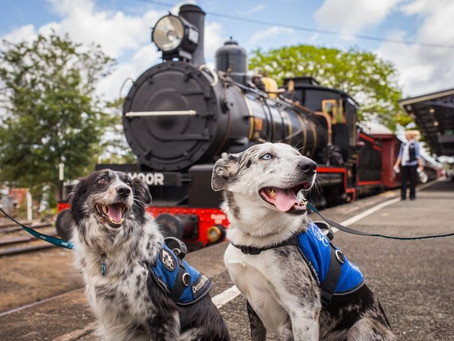 Top 5 Dog Friendly Things To Do In Somerset