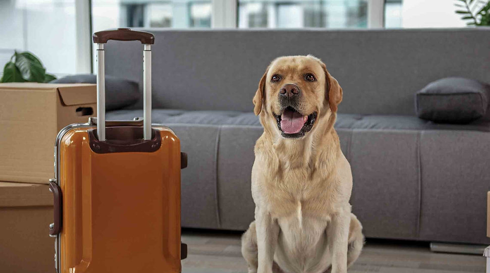 tips-for-travelling-with-pets_edited_edi